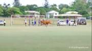 შინაური ცხოველი საფეხბურთო მოედანზე შეიჭრა (ვიდეო)